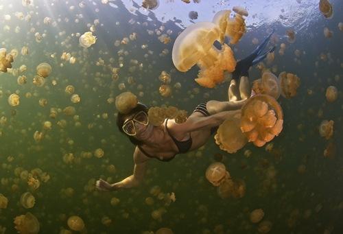 Đắm mình trong một hồ đầy sứa tại đảo quốc Micronesia, phía đông bắc của Papua New Guinea.