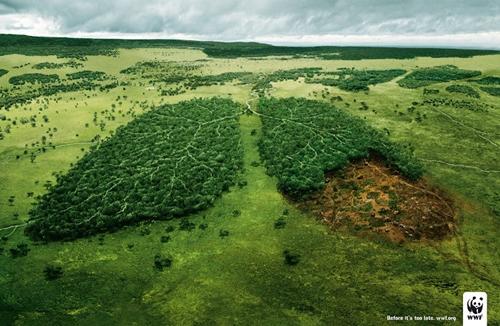 Lá phổi xanh của Trái Đất đang bị tổn thương và dần thu hẹp bởi tác động trực tiếp của con người.