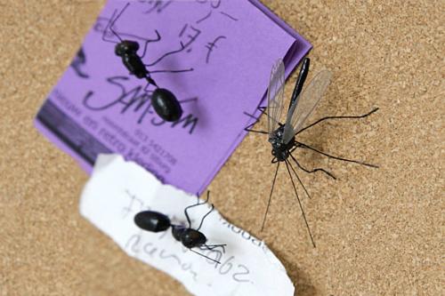 đinh ghim côn trùng.jpg