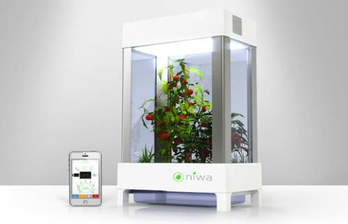 niwa-garden_1.jpg