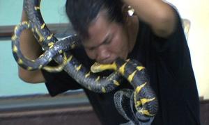Người đàn ông 'khóa môi' với rắn độc
