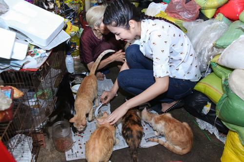 Đến nhà vào lúc chiều tối cũng là lúc bà cho những chú mèo ăn, Ngọc Hân cùng bà chăm sóc đàn mèo trong đó có cả những chú mèo mới sinh bị bỏ rơi, bà Quý cũng cẩn thận nấu cháo và bón cho từng chú mèo