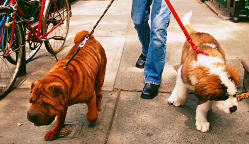 dog-walker-1040cs053012-3880-1404116311.