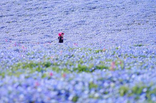 nemophilas-field-hitachi-seasi-4556-1566