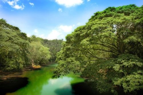 Và không gì tuyệt hơn là bóng mát từ tán cây rậm rạp toả ra trong một ngày nắng gắt.