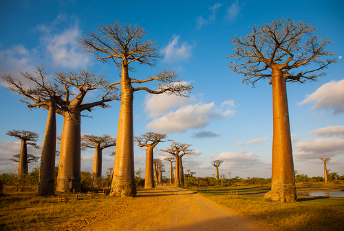 Madagascar1-6061-1406112646.jpg