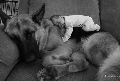 cute-big-dogs-and-babies-1-6464-14063518