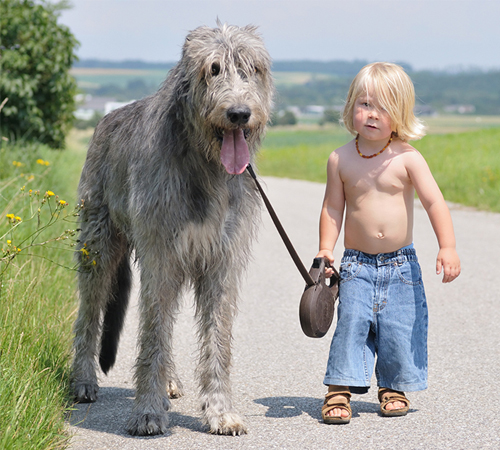 cute-big-dogs-and-babies-10-5926-1406351