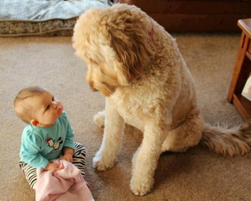 cute-big-dogs-and-babies-2-8458-14063518