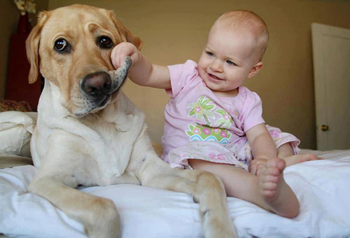 cute-big-dogs-and-babies-3-1760-14063518