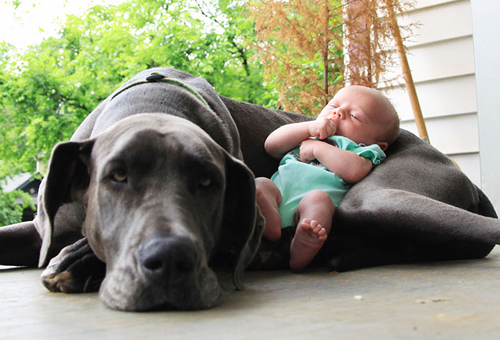 cute-big-dogs-and-babies-4-1596-14063518