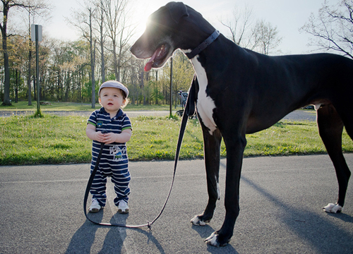 cute-big-dogs-and-babies-5-4995-14063518