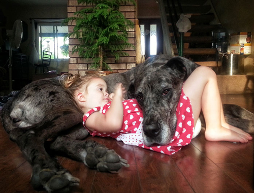 cute-big-dogs-and-babies-6-6834-14063518