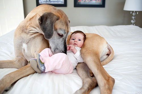 cute-big-dogs-and-babies-7-6256-14063518