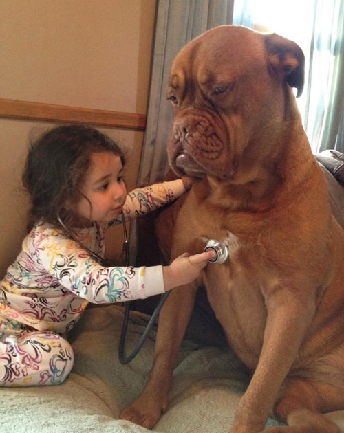 cute-big-dogs-and-babies-9-6208-14063518