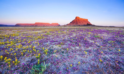 colorado-wildflowers-1-3228-1407235592.j