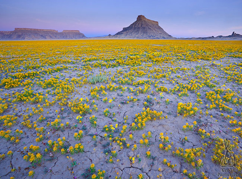colorado-wildflowers-2-3717-1407235592.j