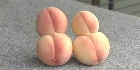 Fukushima-mutant-peaches-8025-1407858719