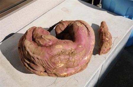 Fukushima-mutant-potato-7147-1407858719.