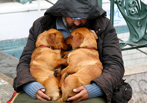 Hình ảnh ấm áp khi người đàn ông vô gia cư ôm trọn hai chú cún vào lòng.
