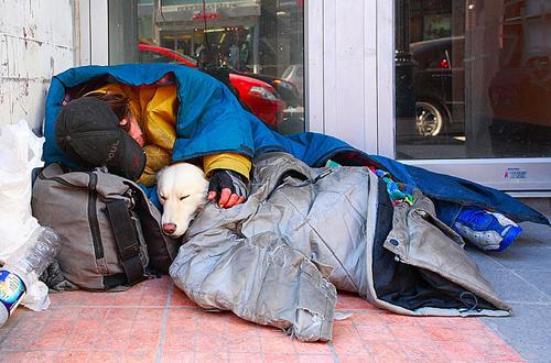 Nhiều chú chó vô gia cư được đối xử và chăm sóc rất tốt. Những người lang thang dù bị đói rét cũng sẵn sàng chia sẻ, nhường đồ ăn, quần áo ấm của mình cho cún cưng.