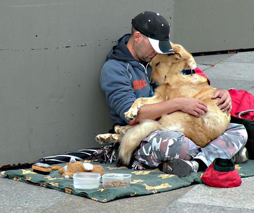 Những chú chó nằm yên bình trong lòng chủ ở một góc đường phố, cùng chủ phiêu bạt khắp nơi ăn xin.