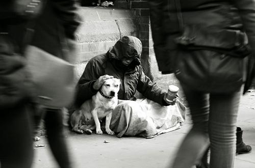 Chó là người bạn, người thân, vệ sĩ đáng tin cậy.