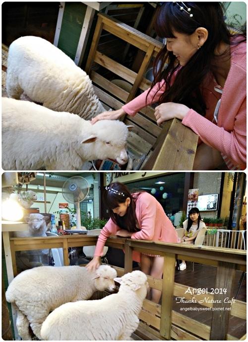 Bạn có thể thoải mái vuốt ve 2 chú cừu.