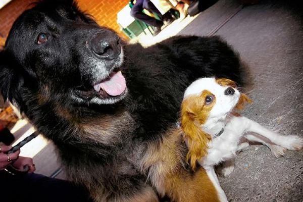 """Sau khi được nhận nuôi, cô chó mù Ellie đã bất ngờ tìm được """"đôi mắt"""" của mình, đó chính là một chú chó khác trong nhà, Leo. Khi đi dạo trong công viên, Leo sẽ dẫn Ellie đi xung quanh và bảo vệ Ellie khỏi những con chó khác."""