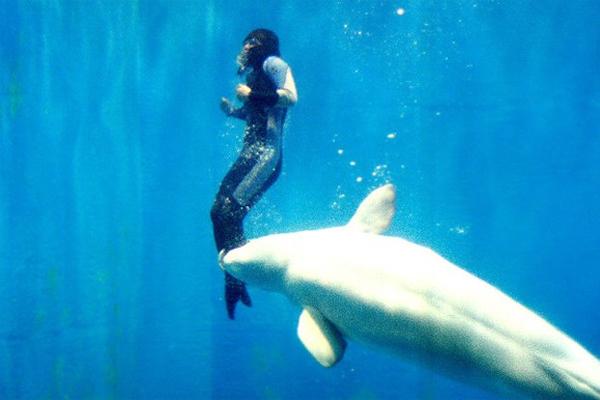 Trong một cuộc thi lặn, Yang Yun nghĩ mình sẽ chết khi nhiệt độ lạnh giá ở vùng biển Bắc cực làm chân cô tê liệt. May thay, cá voi trắng Mila đã xuất hiện và cứu Yang Yun bằng cách dùng mũi đẩy Yang Yun lên khỏi mặt nước.