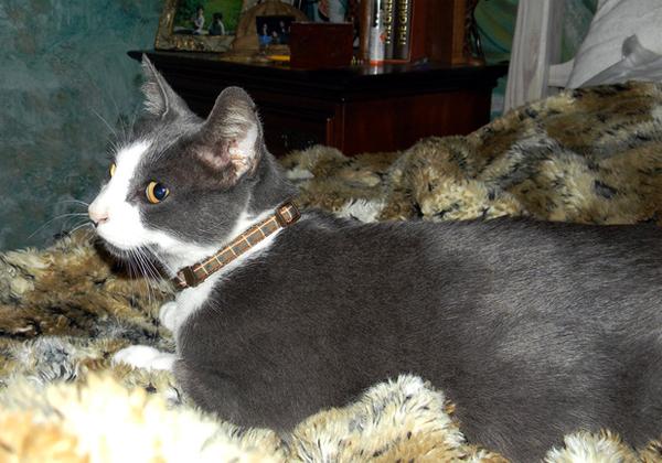 5 năm sau khi cơn bão Katrina tàn phá căn nhà, Jennifer nhận được một tin nhắn từ tổ chức xã hội cho biết chú mèo cưng của cô đã được tìm thấy. Dù mèo Scrub bị lạc chủ suốt 5 năm nhưng khi trở lại sống cùng Jennifer, Scrub vẫn ngay lập tức tìm được chỗ ngủ quen thuộc dưới chăn của cô chủ.