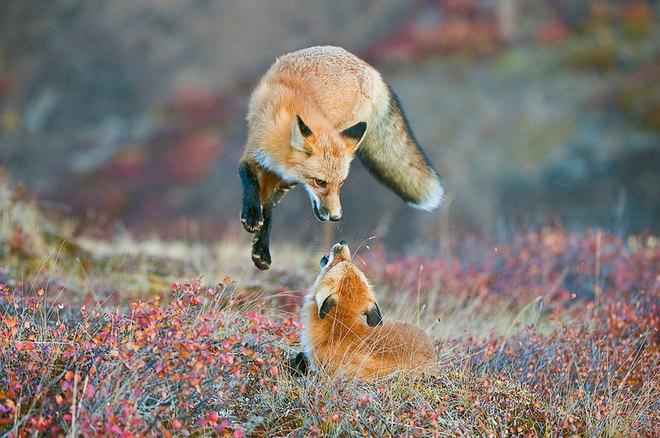 Chiêm ngưỡng 21 bức ảnh thiên nhiên hoang dã đẹp choáng ngợp