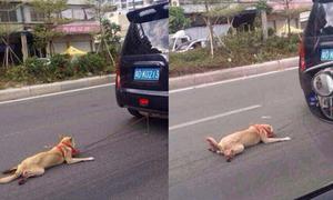 Ảnh chú chó bị buộc cổ, kéo lê sau ô tô gây phẫn nộ