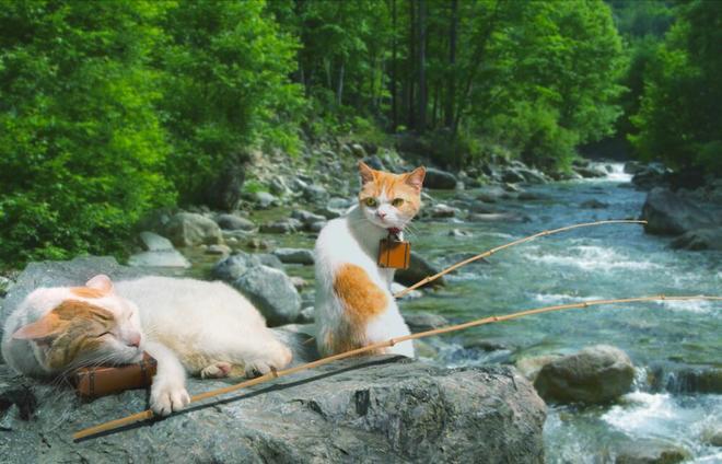 Đôi mèo siêu kute đi du lịch khắp Nhật Bản