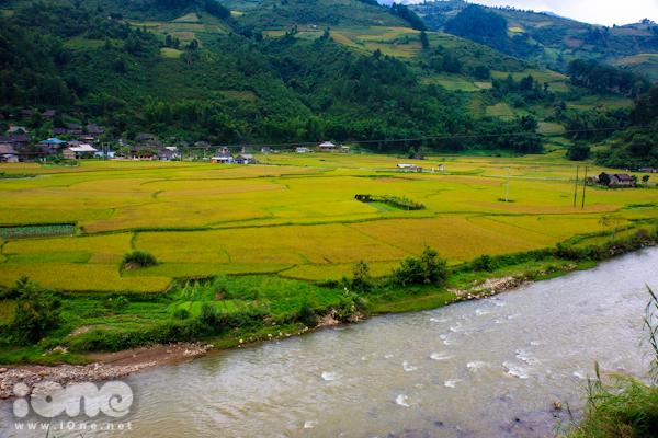 Hình ảnh con suối chạy dài càng nổi bật hơn giữa màu vàng lúa chín.