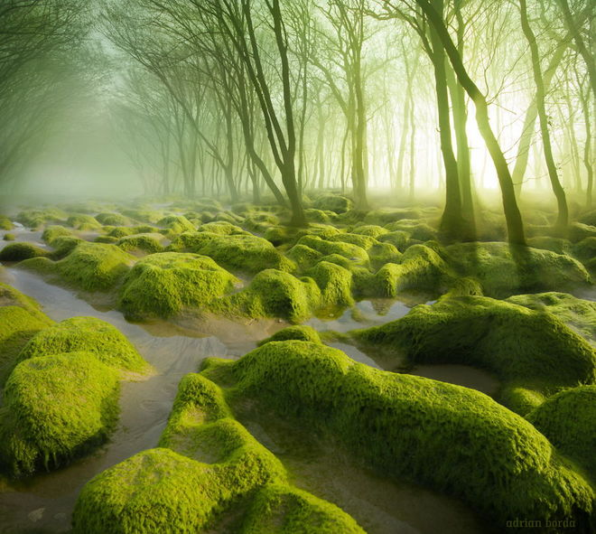forest-photography-1-1413454759_660x0