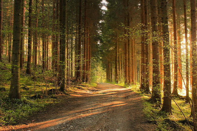 forest-photography-10-1413454762_660x0