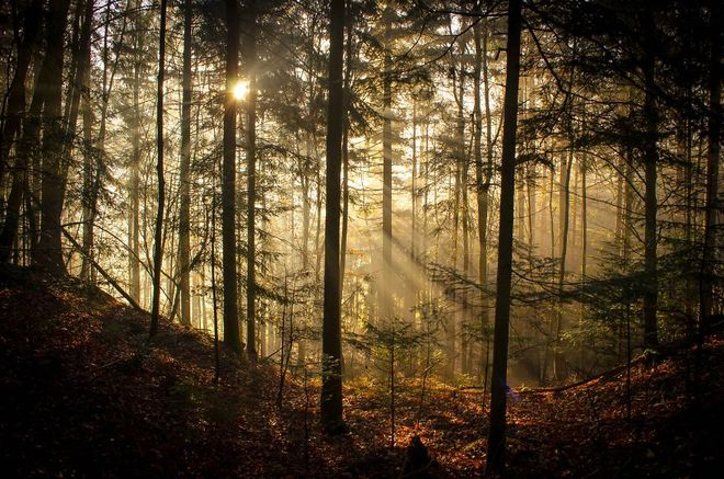forest-photography-12-1413454763_660x0