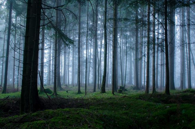 forest-photography-13-1413454763_660x0