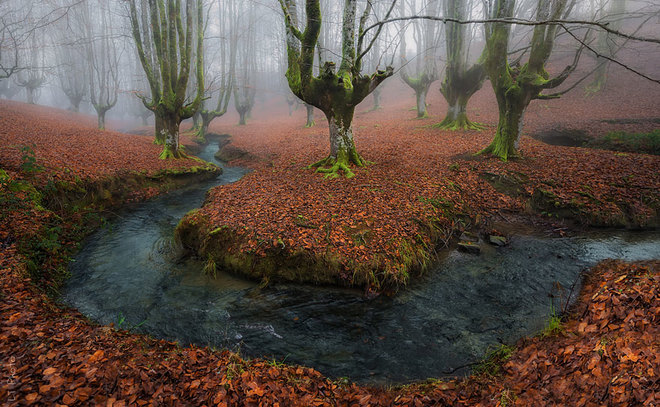 forest-photography-14-1413454764_660x0