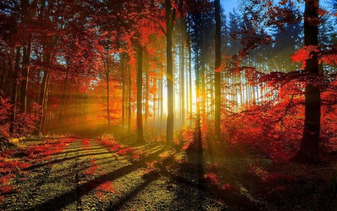 forest-photography-1413454759_660x0