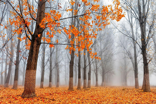 forest-photography-16-1413454764_660x0