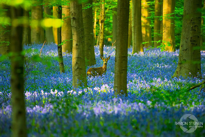 forest-photography-2-1413454760_660x0