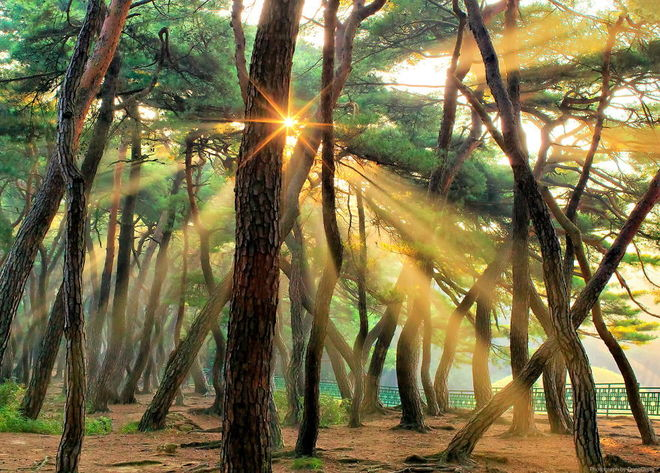 forest-photography-3-1413454760_660x0