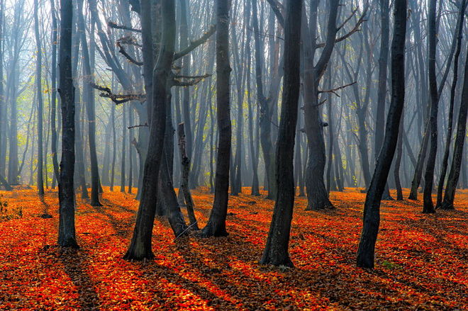 forest-photography-4-1413454760_660x0