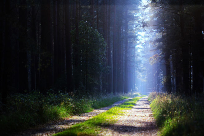 forest-photography-5-1413454761_660x0