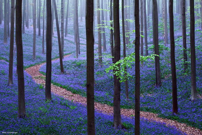 forest-photography-8-1413454762_660x0