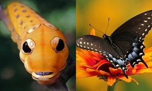 Hình ảnh tuyệt đẹp trước và sau khi sâu lột xác thành bướm