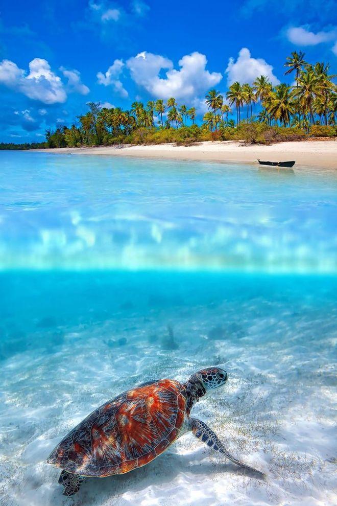 Cảnh tượng đáng kinh ngạc dưới mặt biển xanh
