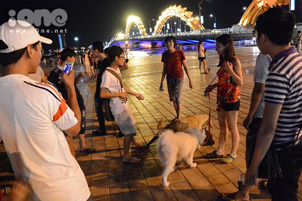 Hằng đêm, đông nhất vào cuối tuần, những chú chó cưng thường được các cô, cậu chở ra đường Bạch Đằng bằng xe máy để giao lưu với những người cùng sở thích yêu động vật.